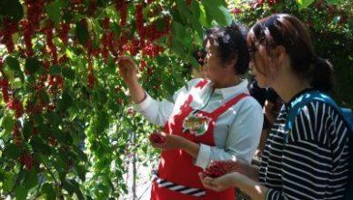 2015, 단양군 오미자부자마을 지역특성화 사업