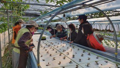 2020, 도시민 농업 일자리 체험 교육
